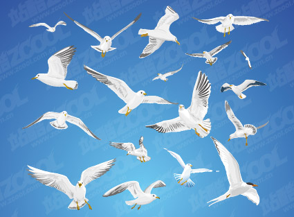 A variety of movements seagull vector material_Download free