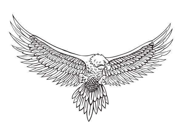 Small Eagle Drawing Eagle Wings Drawing Top