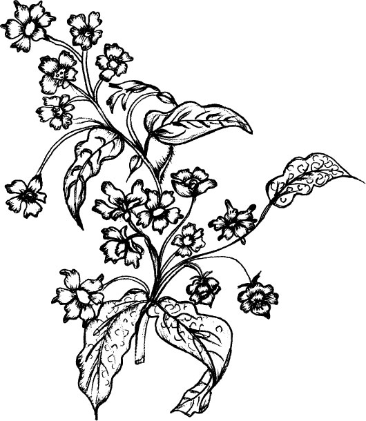 Line Art Flowers And Plants : Vector line drawing of plant material download free