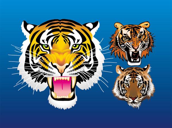 3 tiger head vector materialdownload free vector3d model