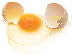 Realistic eggs Vector material