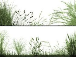 Fine grass PHOTOSHOP brushes!