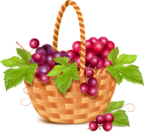 Fruit Basket In The Grapes Vector Material_Download Free